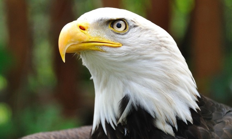 eagle scoutmaster